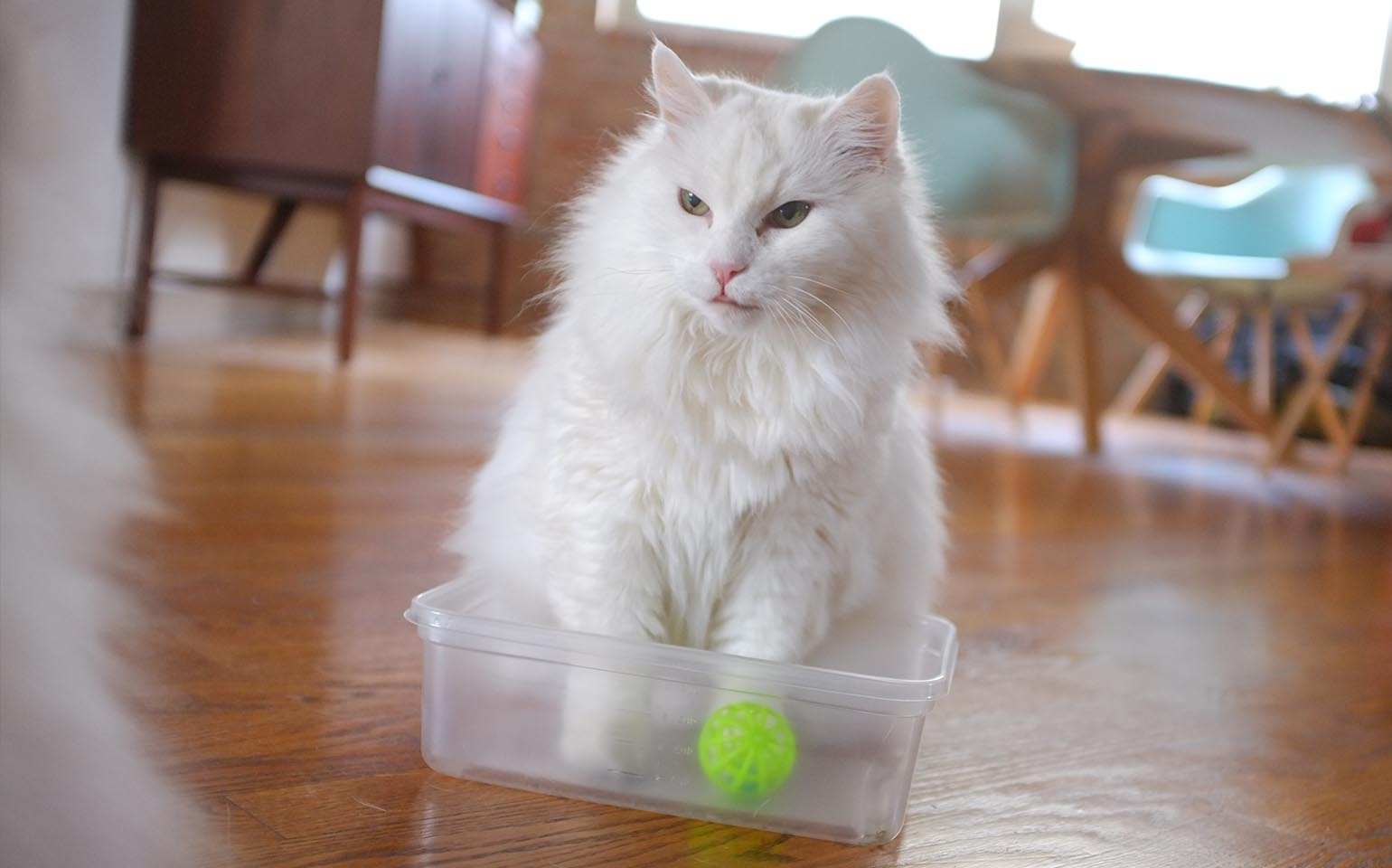 Worksheets For Cats Meow : Ziploc purroduct reviews by cats